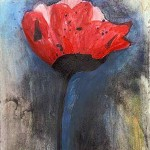Red-Poppy_op
