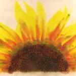 Sunburst_revised