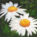 Two-Daisies_op