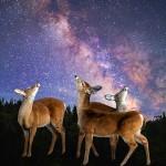 #8 Milt Hawes-Deer and Stars